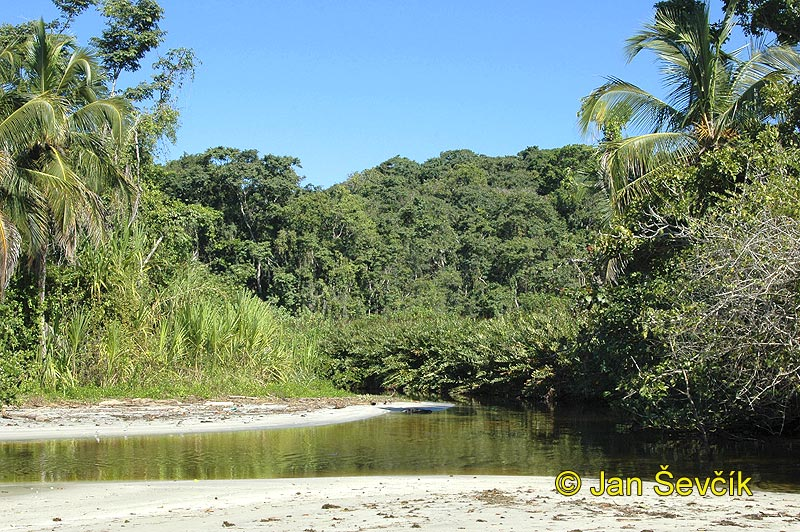 Photo of  Pobřeží Karibiku, coast of the Caribean, National park Cahuita
