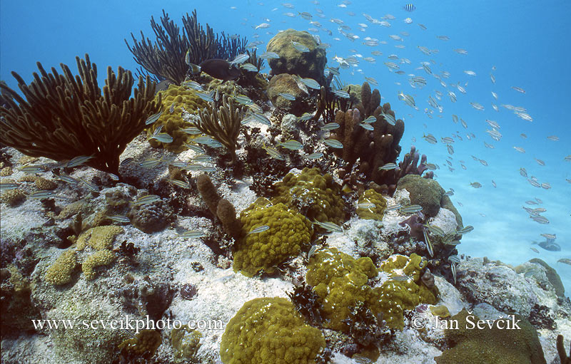 Photo of korálový útes coral reef coast of the Yucatan