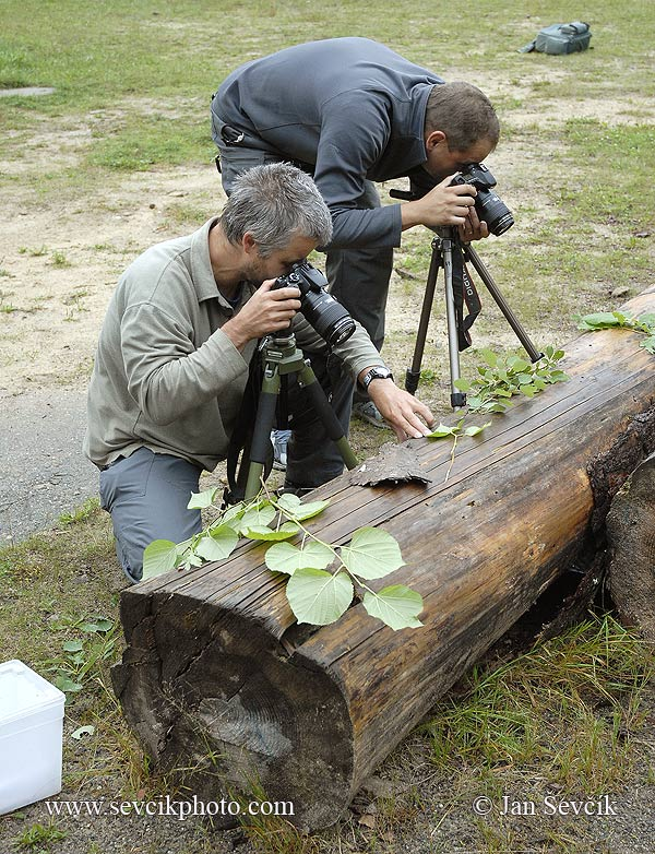 Photo of fotografové hmytu photographers of  insects hobby
