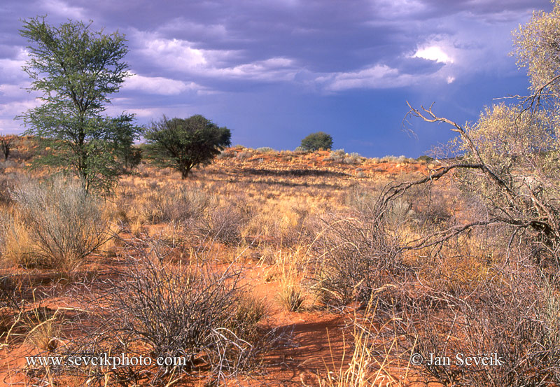 Photo of Kalahari Kgalagadi TP South Africa