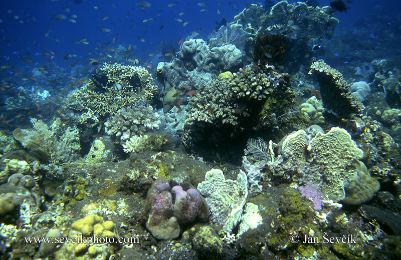 Photo of korálový útes coral reef Bali