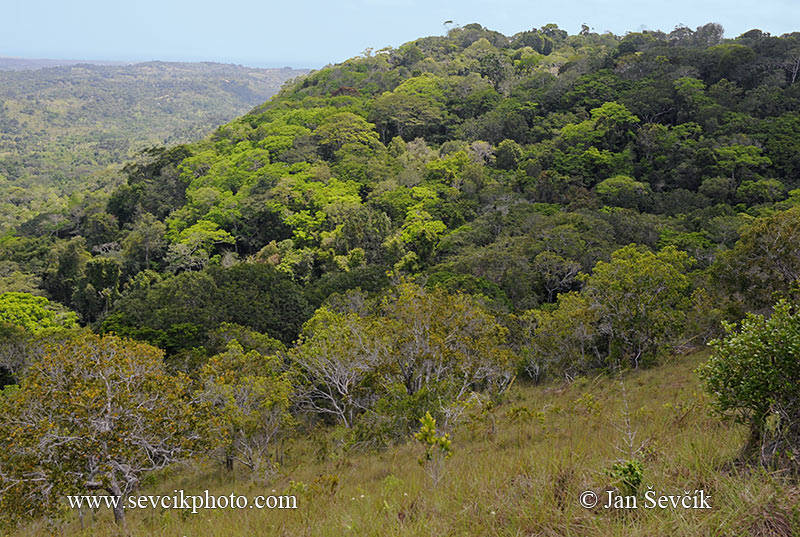 Photo of Národní park National Shimba Hills Kenya Keňa rain forest