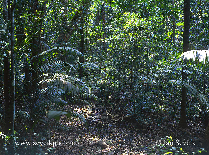 Photo of deštný les rain forest Soberania NP Panama
