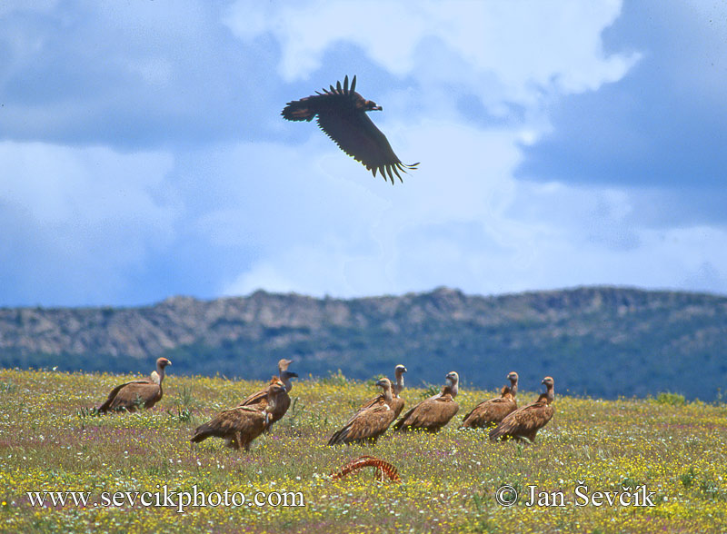 Photo of pastvina se supy pastureland with vultures Spain