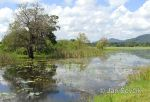 Photo of freshwater lake at Giritale Sri Lanka