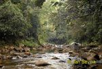 Photo of  rain forest Sinharaja Sri Lanka destny les