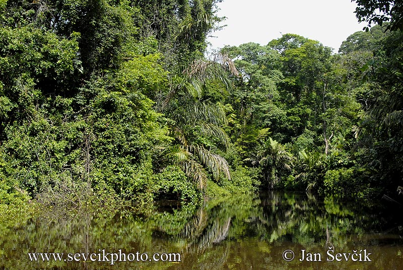 Photo of Tortuguero National Park Costa Rica river