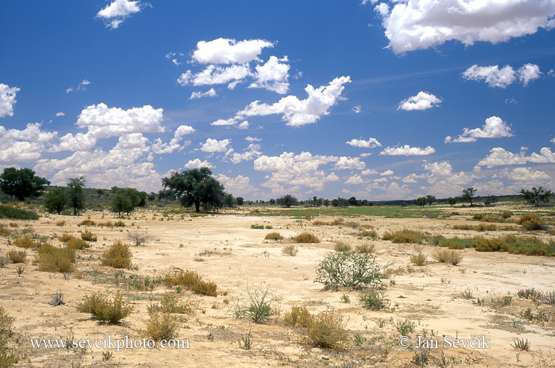 Photo of Kalahari Nossob River Kgalagadi NP South Africa